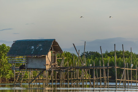 a simple fisherman's nipa hat on bamboo piles with little egrets in a mangrove forest