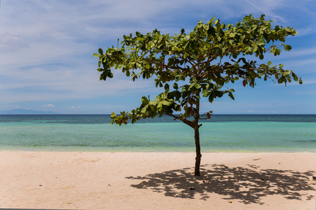 a single talisay tree standing at the white sand beach in the sunshine drop shadows on the white beach, a noon time relaxing scene at the seashore