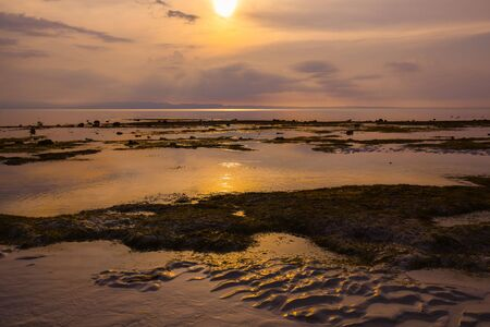 Low tide shows water plants and rocks in the water in a sunset light at the golden hour
