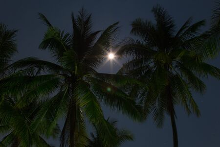 Beach bottom up view palm trees in the night in moonlight with starry sky a vacation relaxing night scene 版權商用圖片