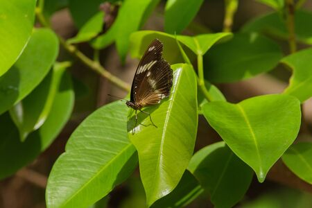 Butterfly on a green leaf in sunshine at a exotic tropical garden scene
