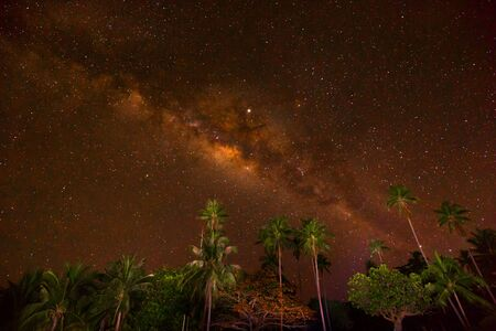 milky way photography with palm tree foreground in a tranquil starlit starry night 版權商用圖片