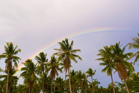 Rainbow spectral colors phenomenon after rain and sunshine in a tropical landscape photography with coconut palm trees 版權商用圖片