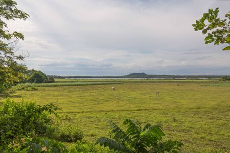 Meadows and pasture and lake danao in the  under a white clouds sky 版權商用圖片