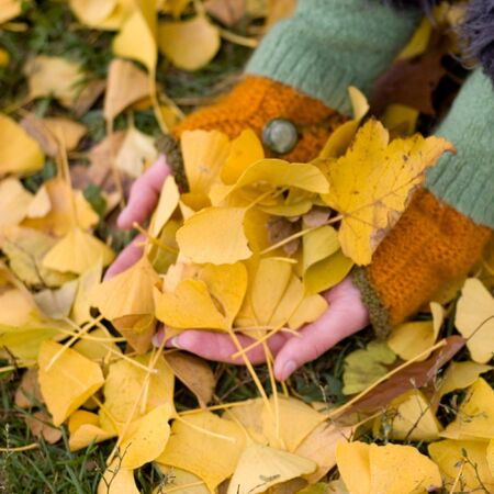 handful of autumn leaves photo