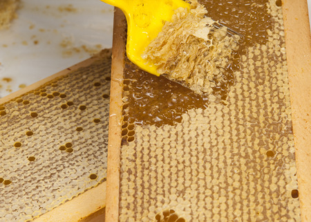 Honey in honeycombs. Natural sweet, close up photo Stock Photo