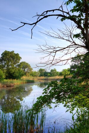 Deep quiet woods on the river Stock Photo - 9881516