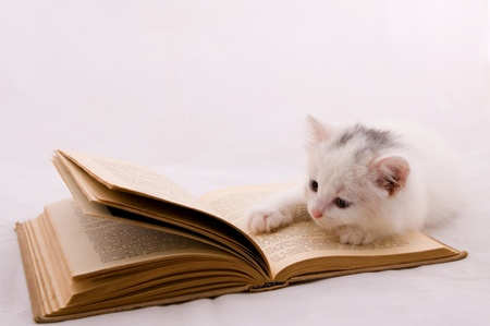 Cute kitten moans on a thick book photo