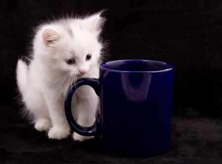 beautiful kitten sits next to the cup on a black background Stock Photo - 10018786
