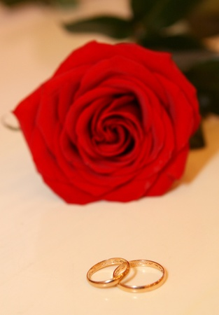 Roses and wedding rings isolated on the white Stock Photo - 11464470