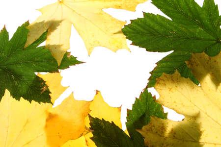 autumn maple leaves seamless pattern background photo