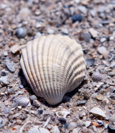 sea shell with sand as background Stock Photo