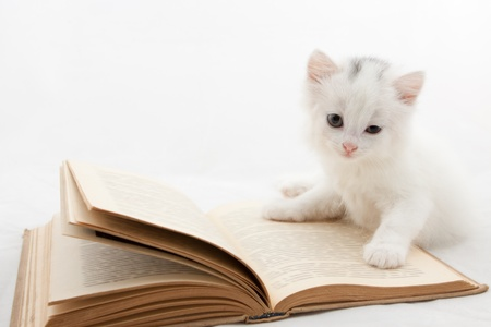Cute kitten lying on old book isolated on white background Standard-Bild