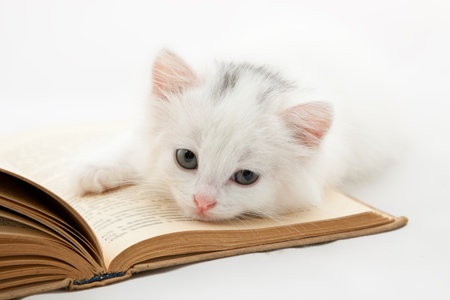 Cute kitten lying on old book isolated on white background Stock Photo