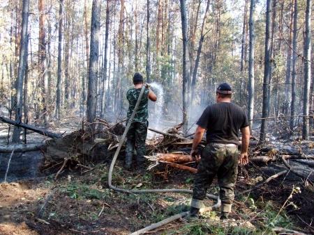 bushfire: Firemen fighting a bushfire  wildfire in the coniferous forest