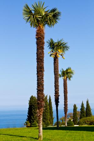three palm trees against a clear blue sky