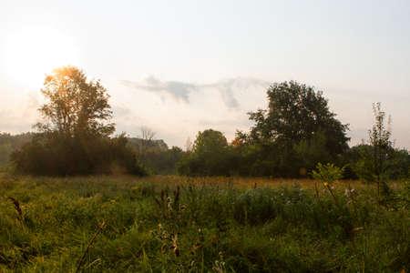 glistening: Por la ma�ana roc�o verde hierba muestra una luz brillando sobre las hojas brillantes de hierba.