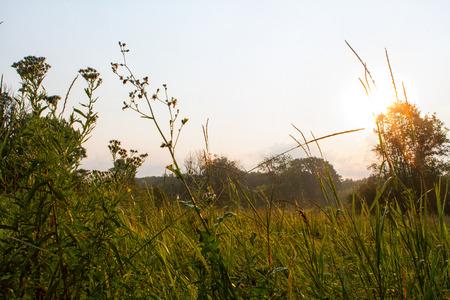 glistening: Por la ma?ana roc?o verde hierba muestra una luz brillando sobre las hojas brillantes de hierba.