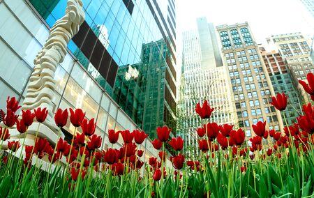 frescura: flores sol cielo tulipán tulipanes frescura hojas Foto de archivo