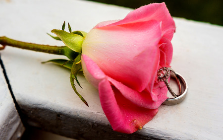 beautiful close-up rose and wedding rings with water drops rain ring rose