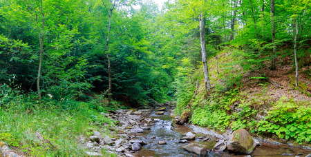 great smokies: Spring time along the Little Pigeon River in the Great Smoky Mountains National Park.