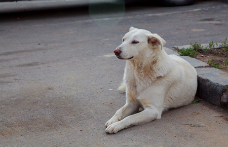 castaway: homeless dogs Positive stray dog walking on a street at sunny day
