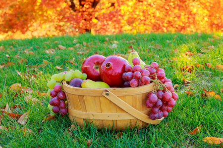 reddening: Autumn still life with fruits in a wicker basket In the basket of apples pears grapes golden autumn