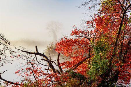 morning fog over river in autumn Autumn morning fog