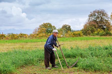 guadaña: El viejo segando hierba con guadaña