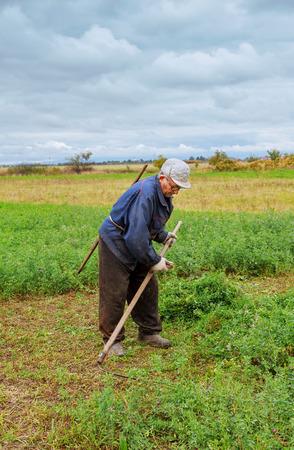vestidos antiguos: Agricultor de ropa vieja siega la hierba en el campo