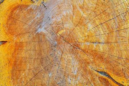 natural wood texture of cut tree trunk, close-up Stock Photo