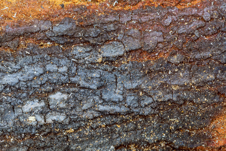 Macro, Close up of dark wooden bark tree texture for background. pattern. Stock Photo