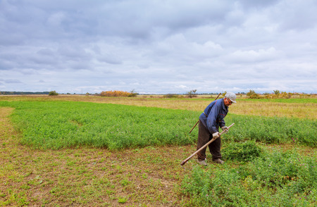 guadaña: Agricultor de ropa vieja siega la hierba en el campo