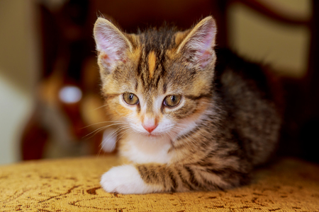 chairs: a small kitten sitting on a wooden chair Stock Photo