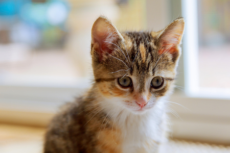 Cute orange kitten photographed with a specialty lens to get a soft dreamy effect. Stock Photo