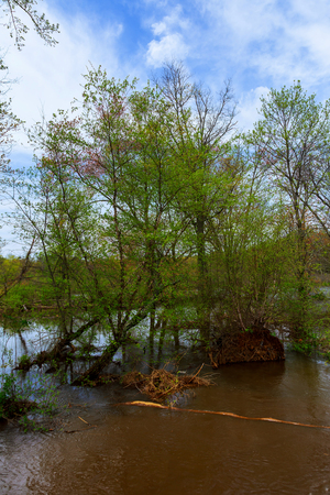 riverside trees: Old tree trunks in a flooded valley after heavy rain showing very verdant conditions Stock Photo
