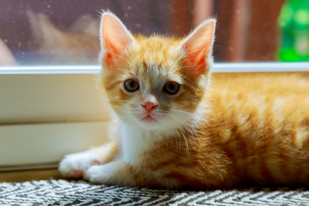 furry tail: Cat relaxing and door small kitten near the glass doors Stock Photo