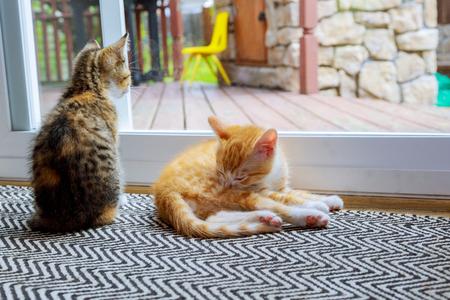Cat relaxing and door small kitten near the glass doors Stock Photo