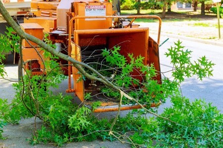 Landscapers using chipper machine to remove and haul chainsaw tree branches Stockfoto