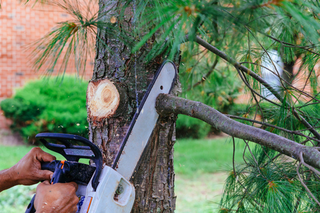 Professional is cutting trees using a chainsaw Cutting trees with saw Banco de Imagens