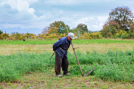 guadaña: An old man in traditional ukranian clothes mowing grass in a me meadow