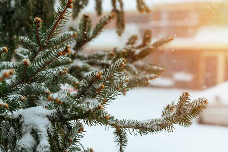 a deposit of small white ice crystals formed on the ground or other surfaces when the temperature falls below freezing.