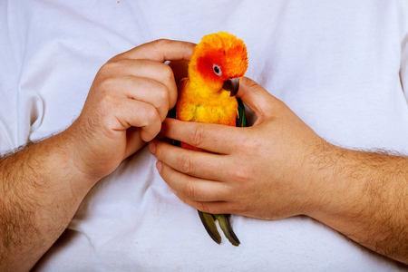 man is playing with parrot sitting on a palm of hand