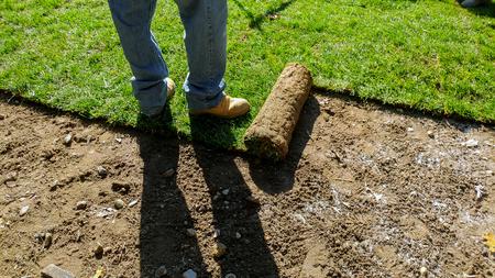 Abrollen von Sod mit frischem, natürlichem, grünem Rasengras Standard-Bild