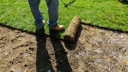 Unrolling Sod with fresh natural roll green lawn grass Stock fotó