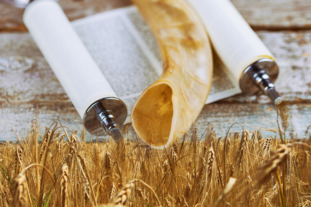 Symbols of jewish holiday Shavuot torah and shofar, wheat field background.