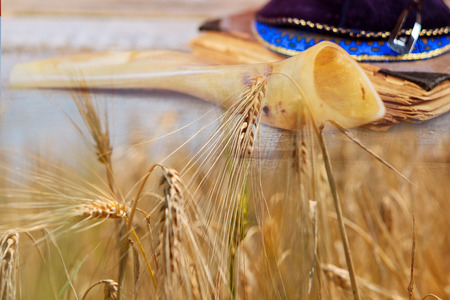 Shavuot jewish holiday torah and shofar, kippa wheat field background.