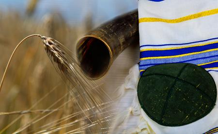 Shavuot jewish holiday shofar kippa kosher harvesting wheat field background.