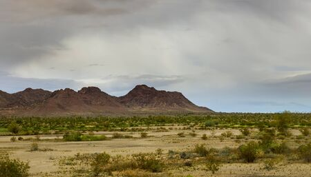 Panorama Saguaro Cactus in desert mountains on skyline of Arizona