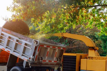 Wood chipper blowing tree branches cut a portable machine used for reducing wood into the back of a truck.